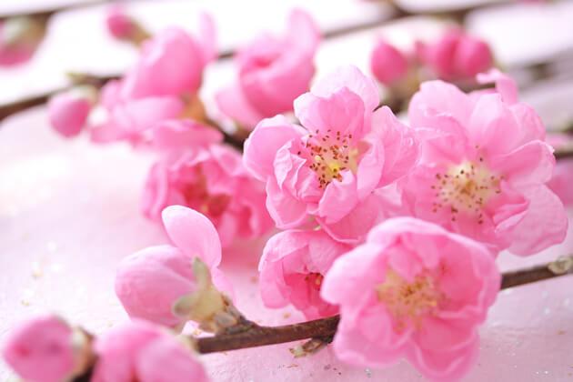 「桃の花」に秘められた意味とは?