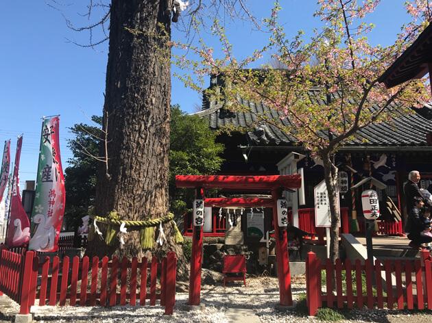 鴻神社のご神木